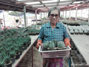 ยายวัย 71 ปี ปลูกกระบองเพชรขาย สร้างรายได้วันละ 300 -5,000 บาท